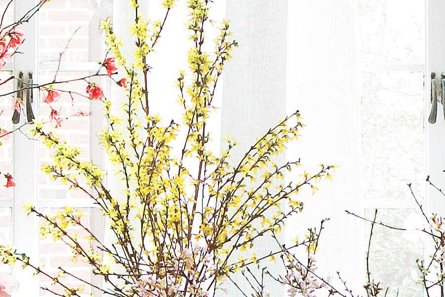 Winter Flowers: Forced Bud Supplies
