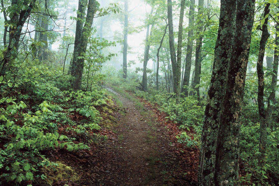 Shenandoah National Park Hiking and Cabins: Undiscovered Gem