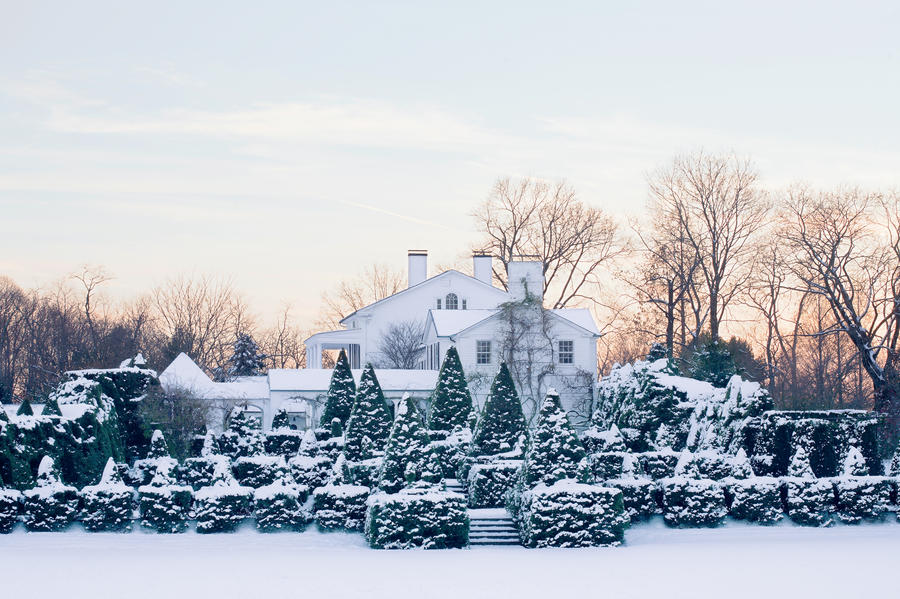 Snow Dusted Topiary Trees