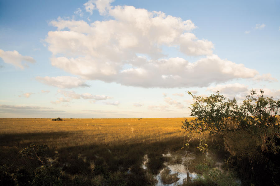 Florida Everglades: Pa-hay-okee Overlook