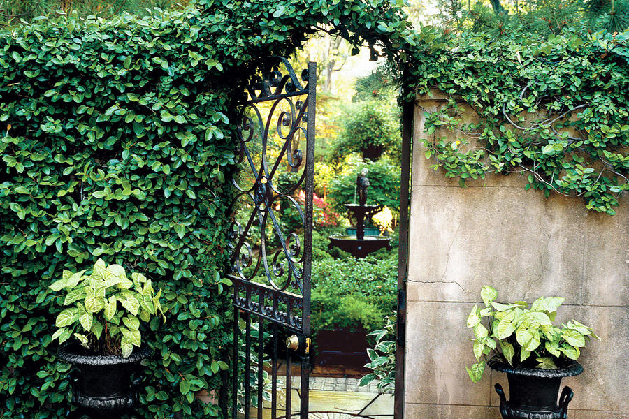 Savannah's Secret Gardens