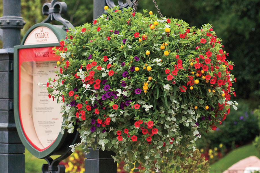 Colorful hanging container hanging garden baskets for Colorful hanging planters