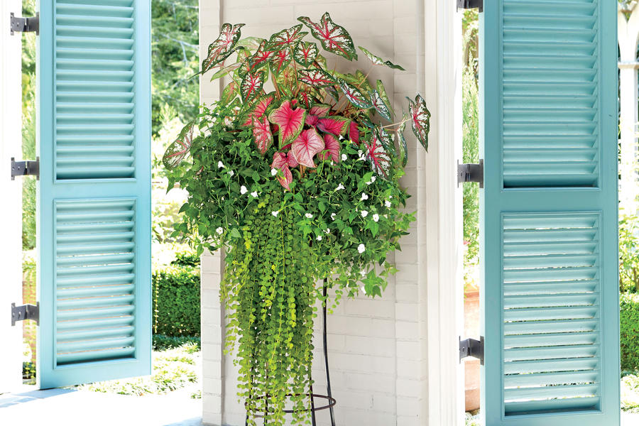 Made for Shade Spectacular Container Gardening Ideas