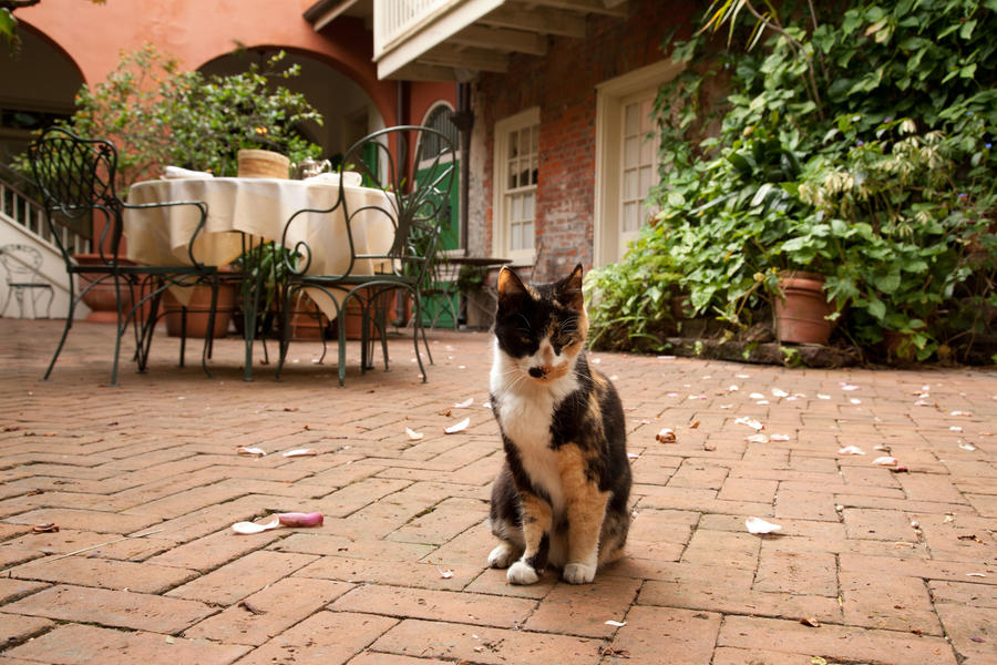Tabby Cat in Courtyard