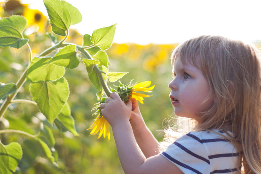 little girl on the field of sunflowers