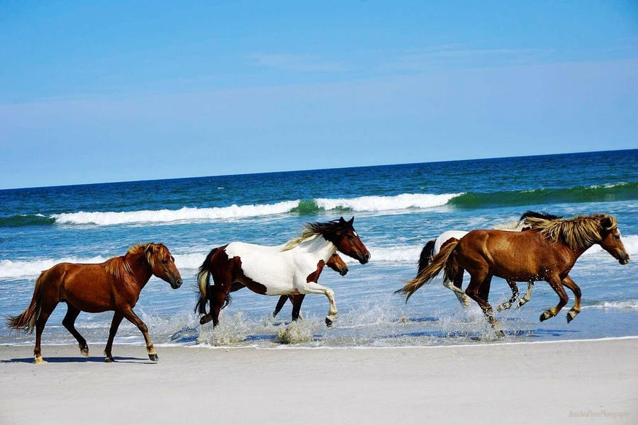 Southern Campgrounds Assateague Island National Seashore, MD