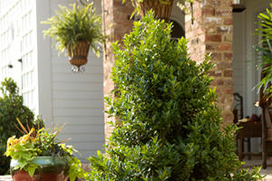 home collection plants - pdsi1