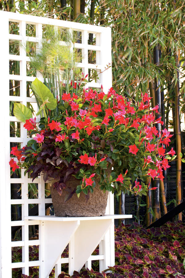 Shade Containers Janet Loughrey