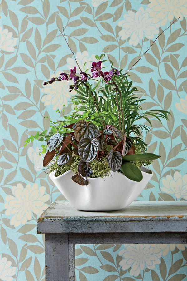 Indoor Container Garden IdeasSouthern Living