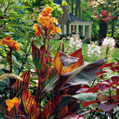 Easy Common Plants For Yards Easy No Mow Lawns