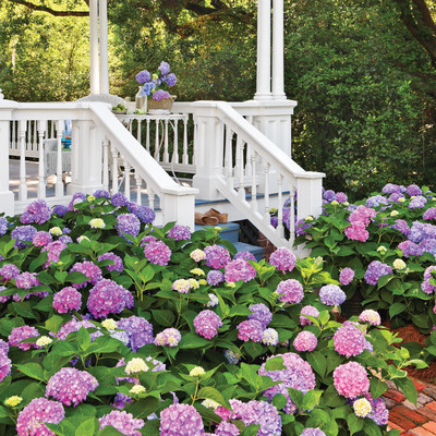 Change your hydrangea color southern living for Redesign my garden