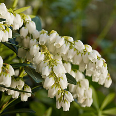 Plant Collection Slideshow Image 4 Southern Living Plant