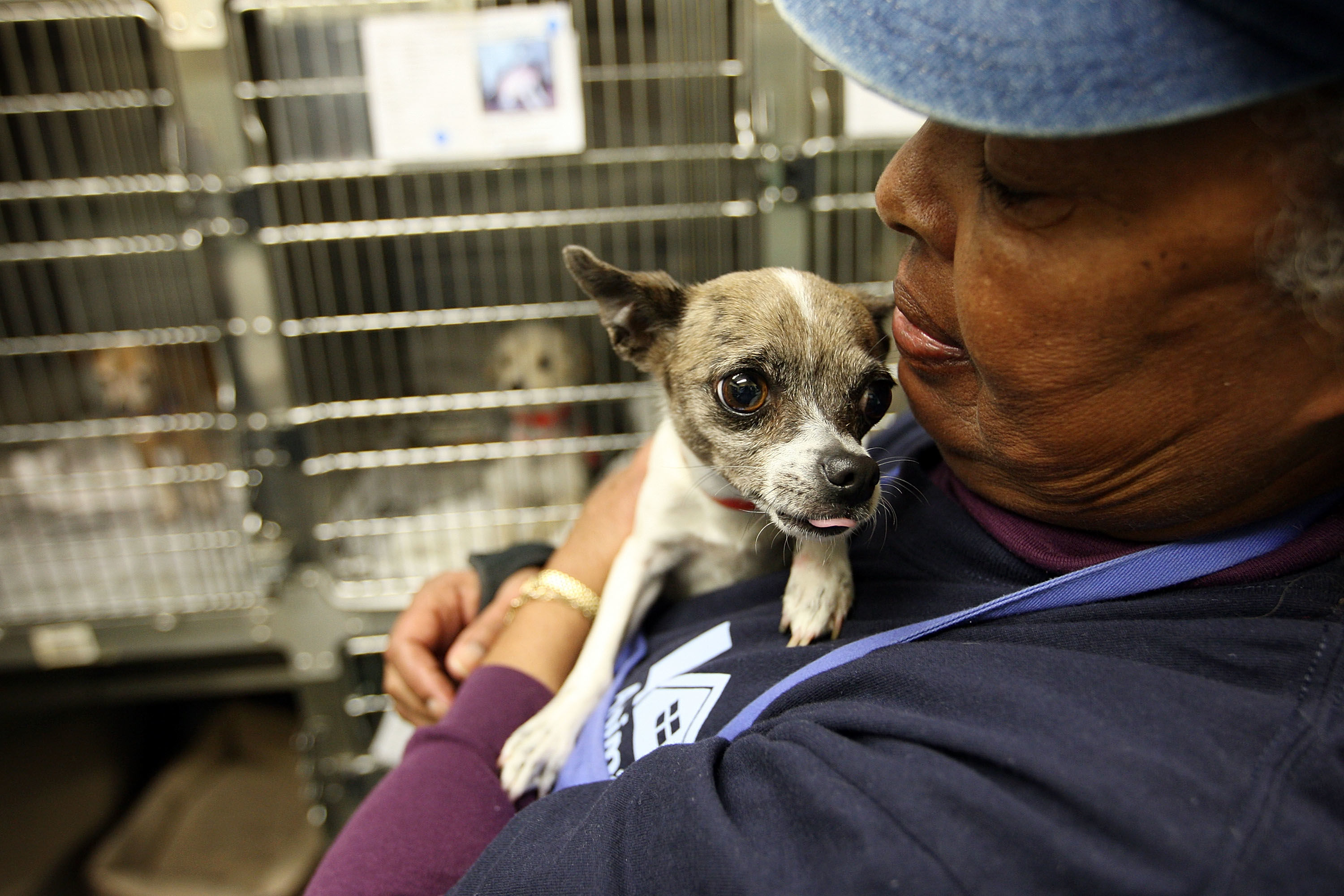 People Just Adopted Every Animal At This North Carolina Shelter