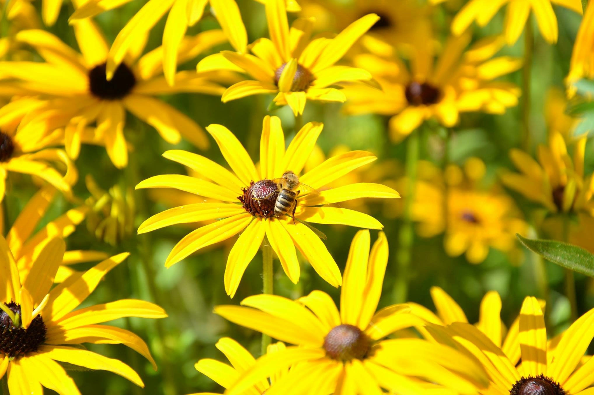 12 flowers that are good for bees southern living mightylinksfo