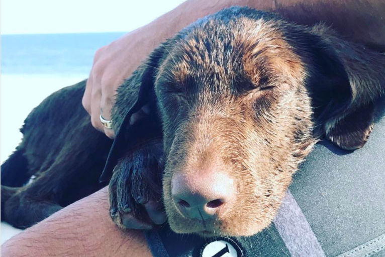 Cuteness Overload! See Luke Bryan's Darling New Puppy, Choc
