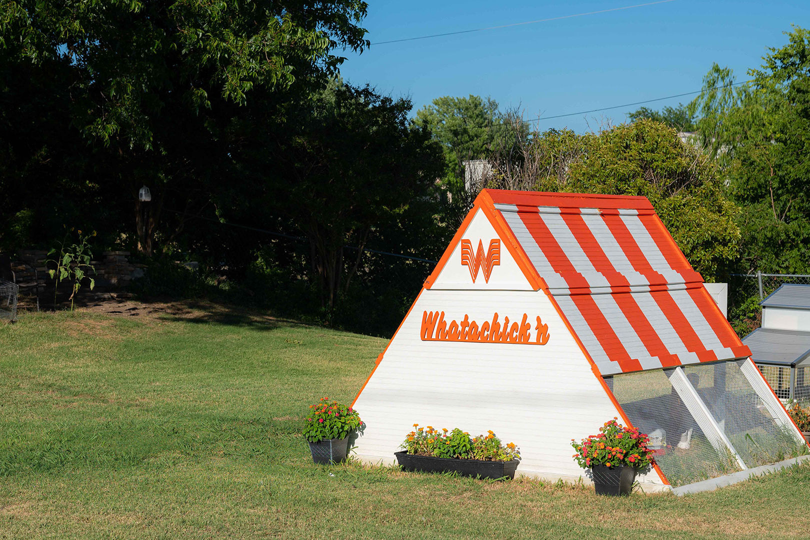 Whatacoop! Texas Couple Builds Whataburger-Inspired Backyard Chicken Coop