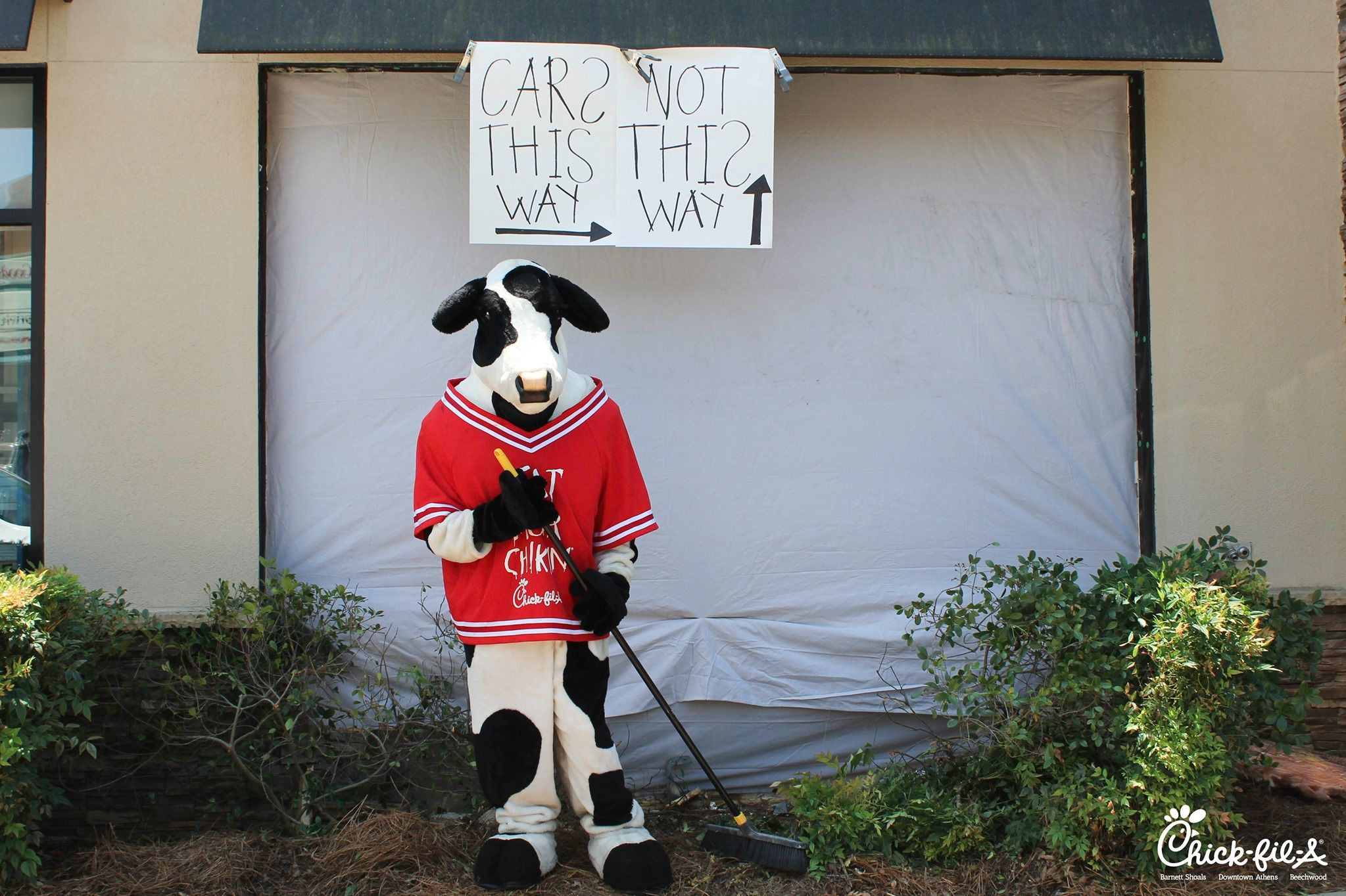 Cow Directs Traffic to Athens Chick fil-A Drive-Thru Hours After Car