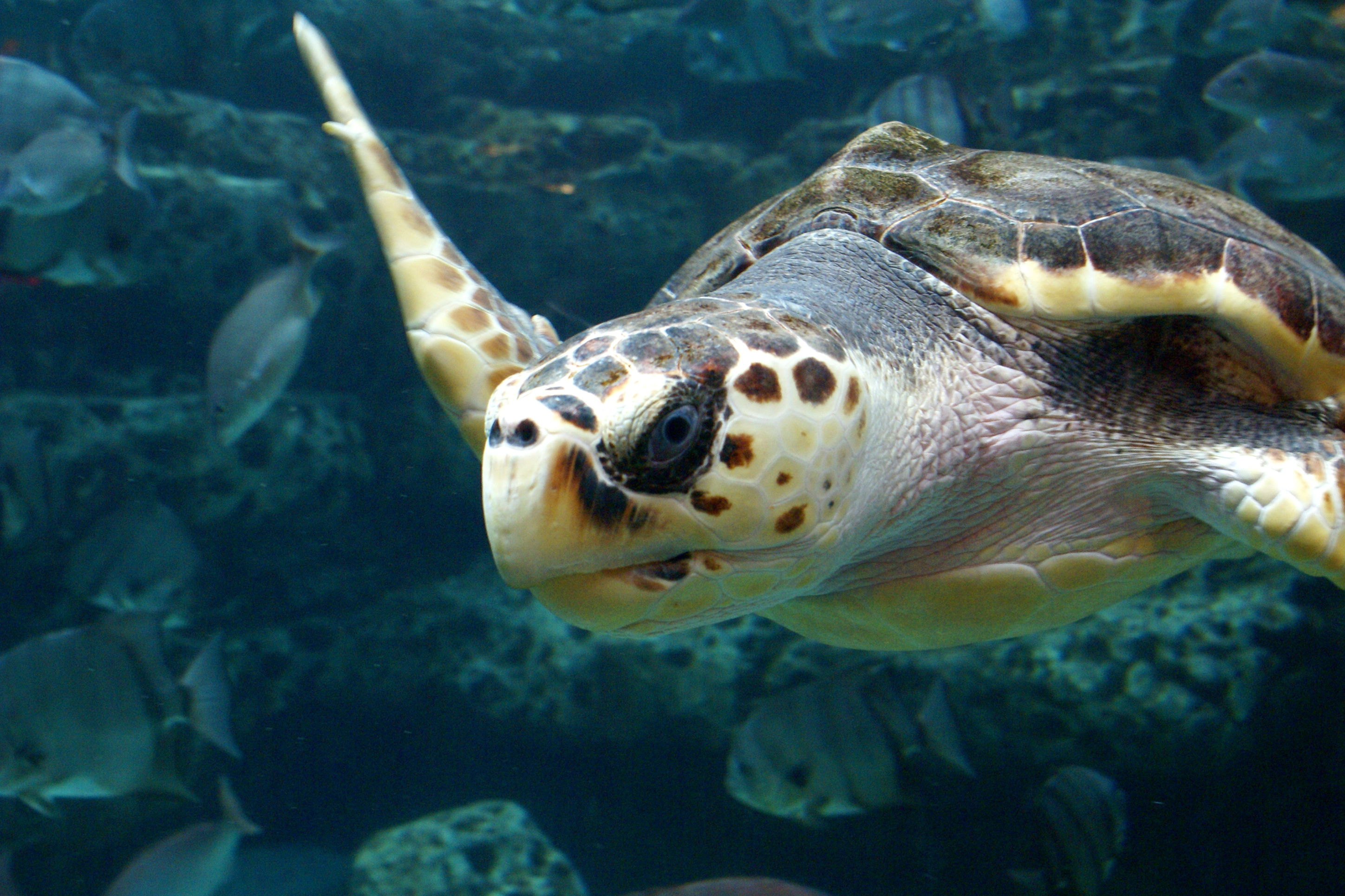 Georgia Sea Turtles Are on the Rise