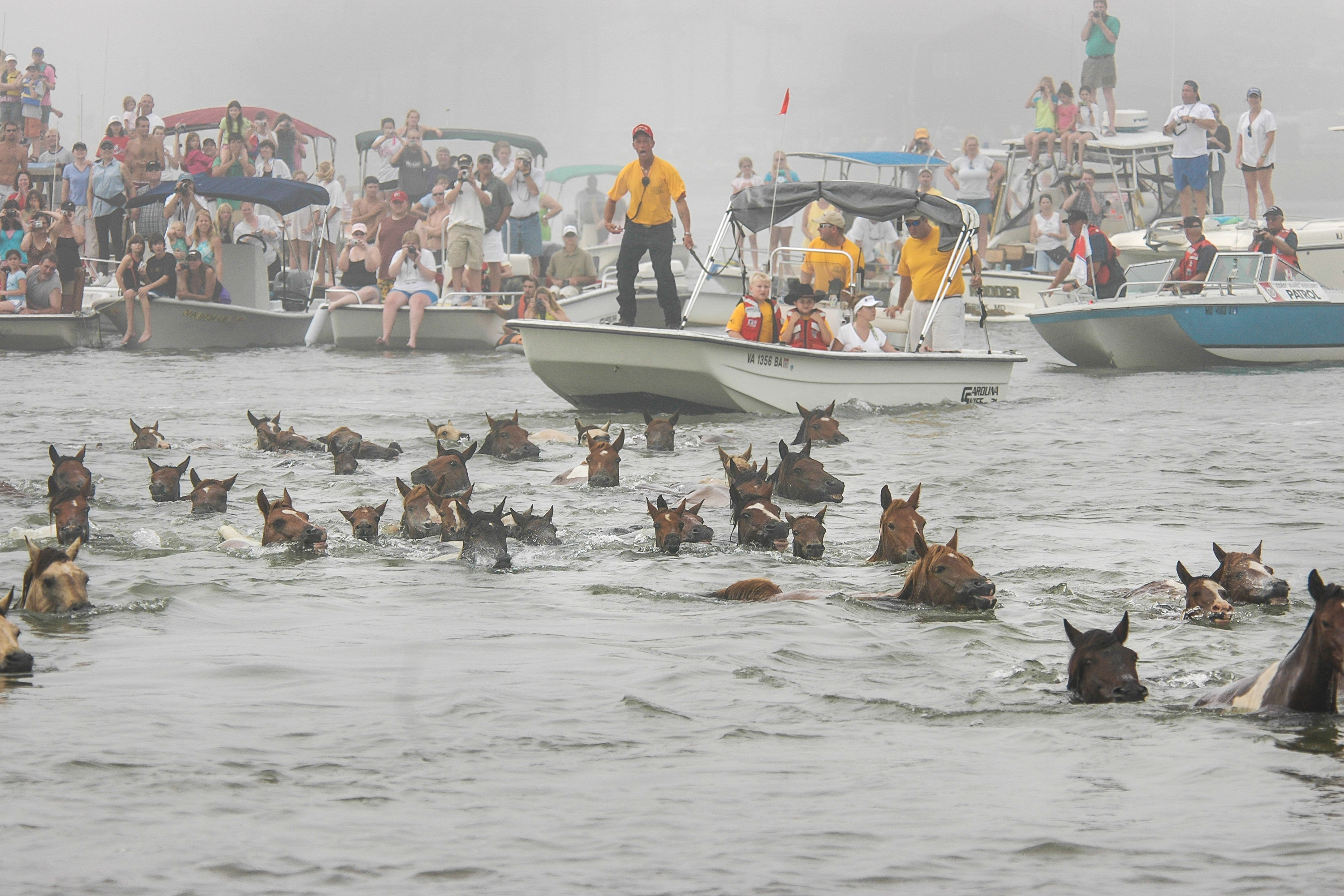 Watch Wild Ponies Swim at Chincoteague in Annual Virginia Tradition