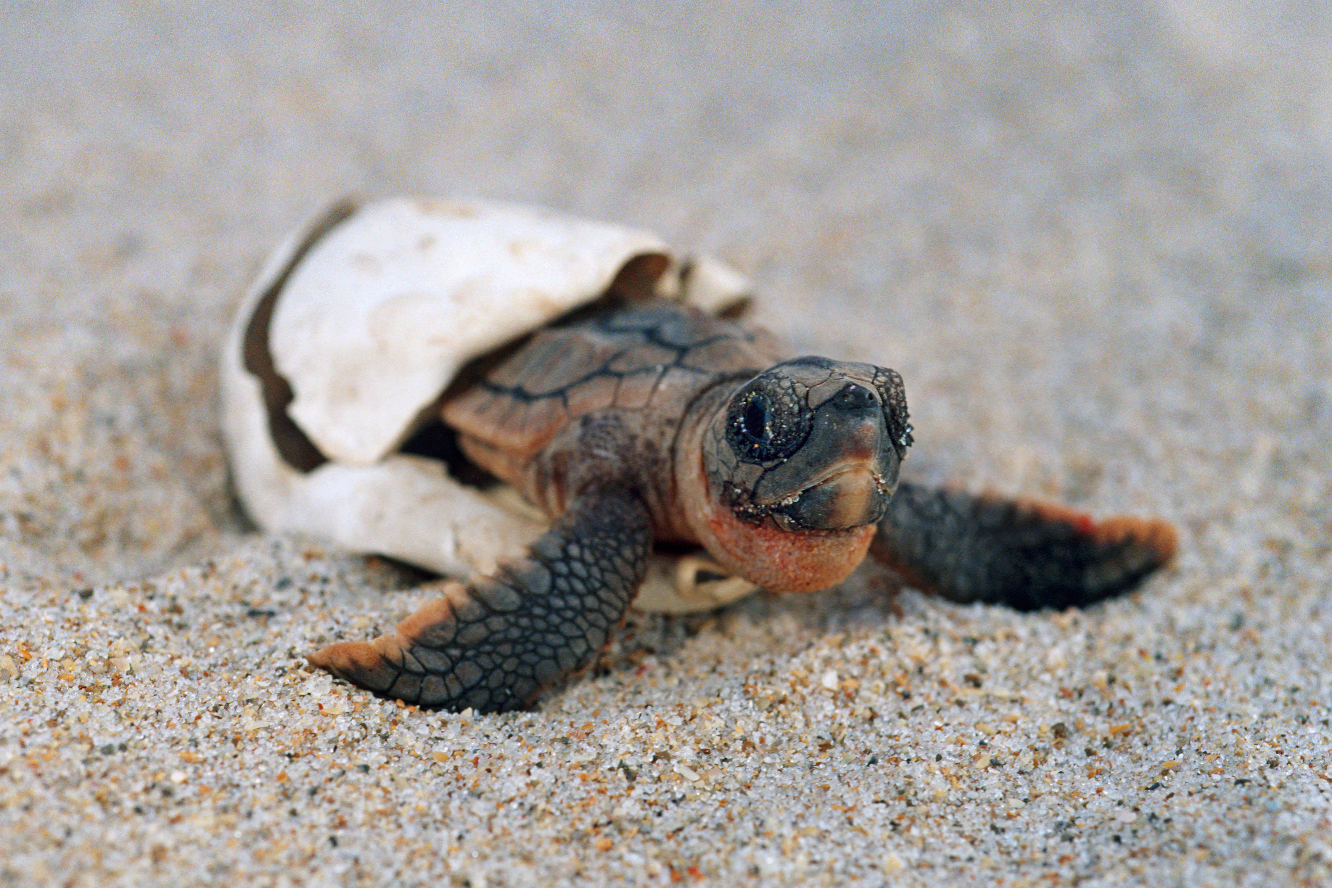 WATCH: What Hurricane Dorian Means for Georgia's Record-Breaking Number of Sea Turtle Nests