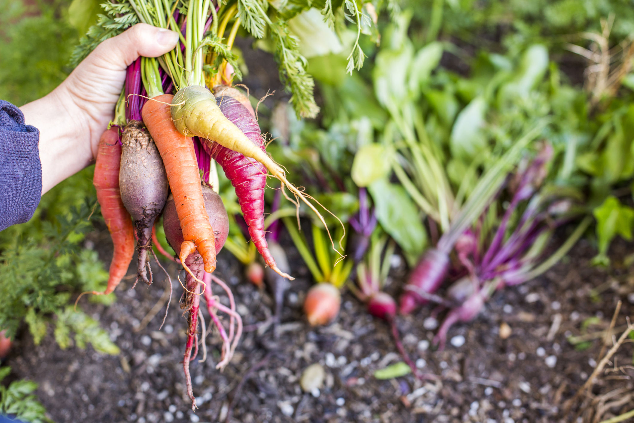 Everything You Need to Know About Root Vegetables