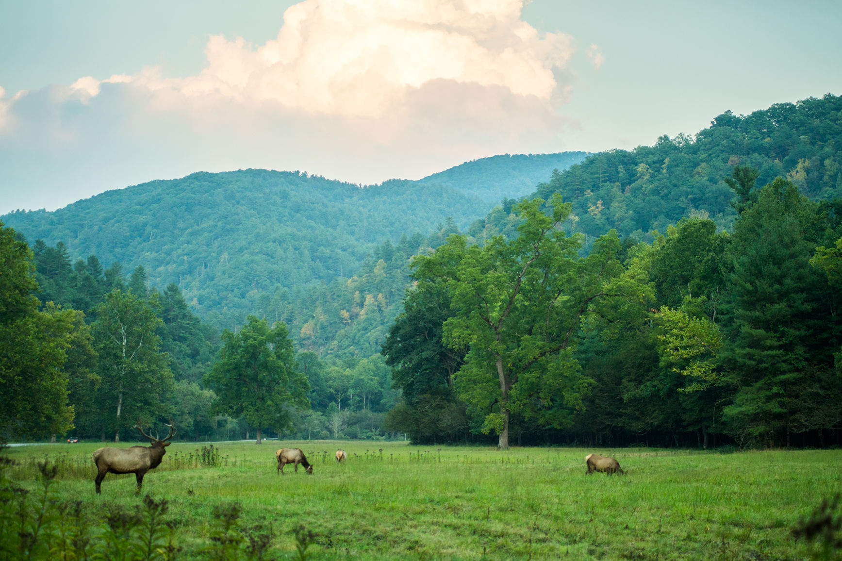 Three Things I Learned at the Smoky Mountain Elk Fest in Maggie Valley, North Carolina