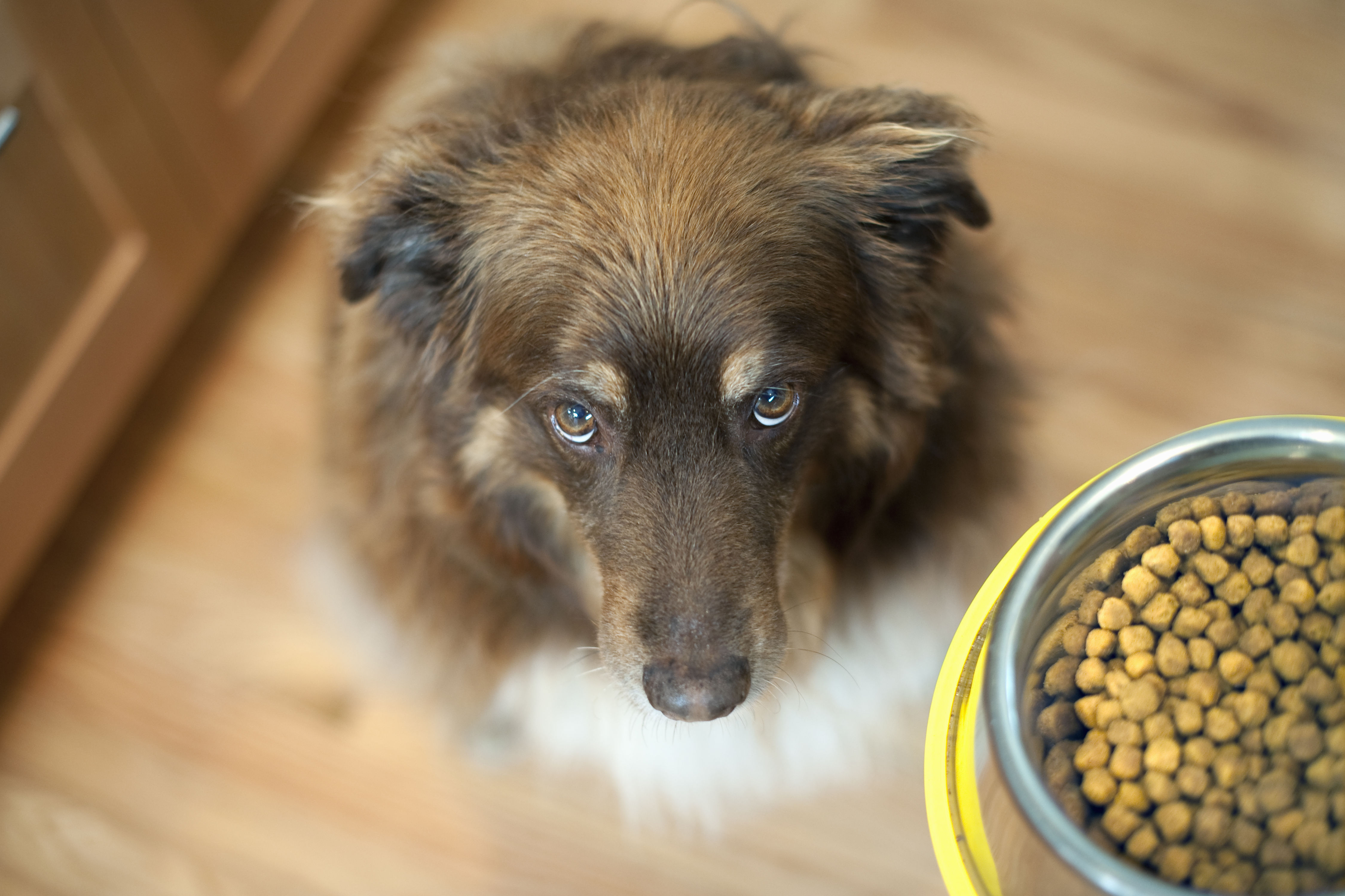 What's the Best Dog Food? Here's a Super Simple Guideline — and It Will Save You Money