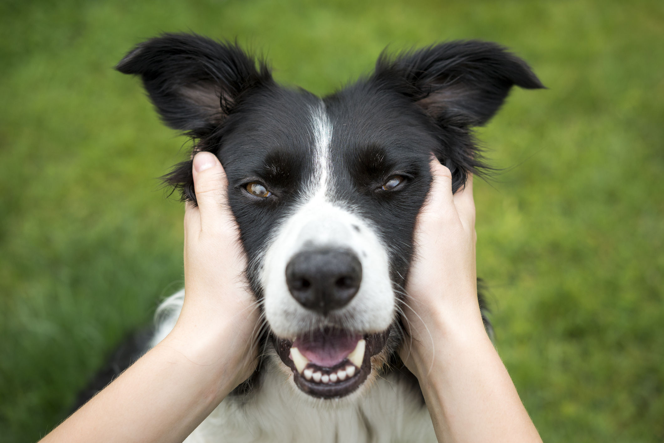 Why Being Neurotic Might Be Good for Your Dog