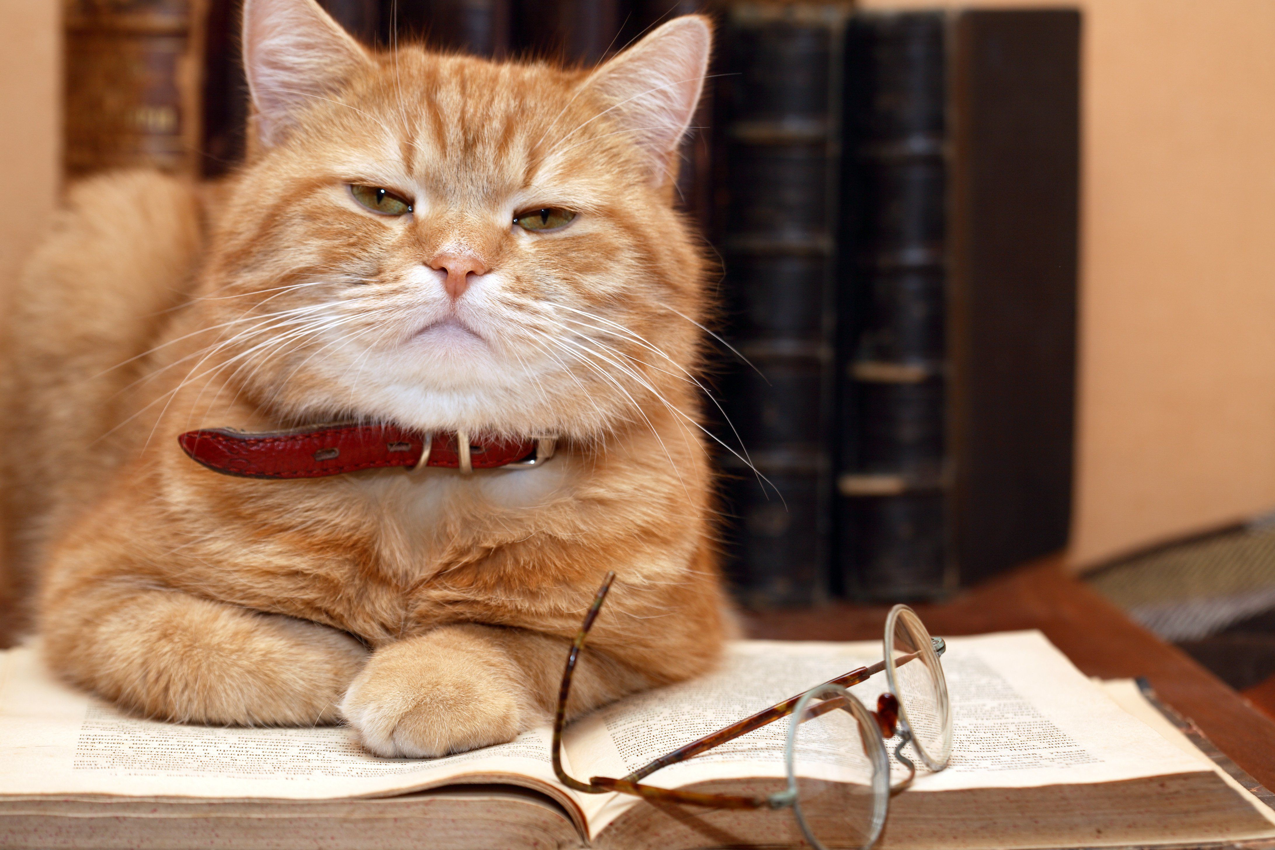 Cats Are Just as Smart as Dogs, Study Suggests