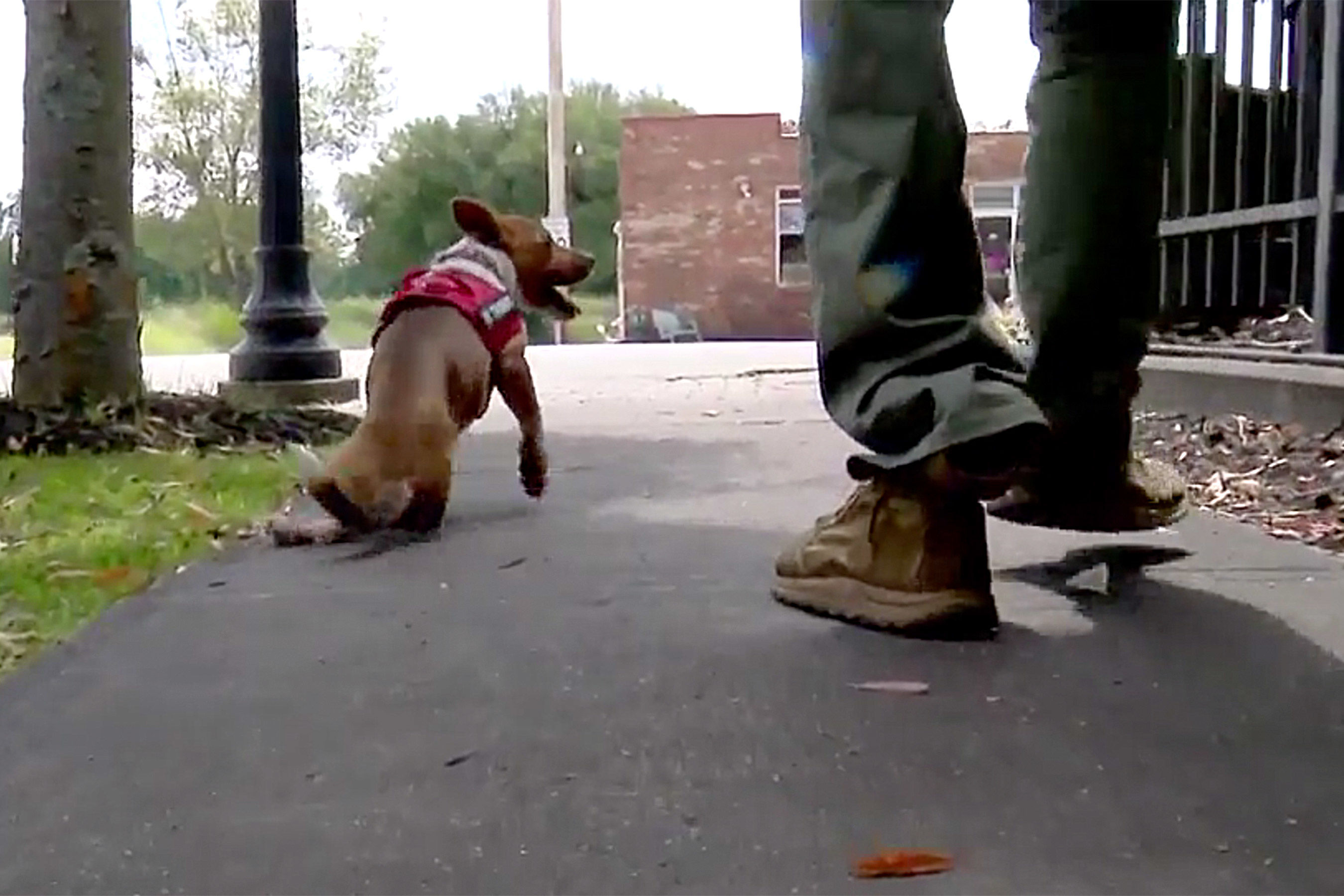 Puppy with Missing Leg Adopted by Amputee Veteran: 'It's Impossible to Not Smile Around Him'