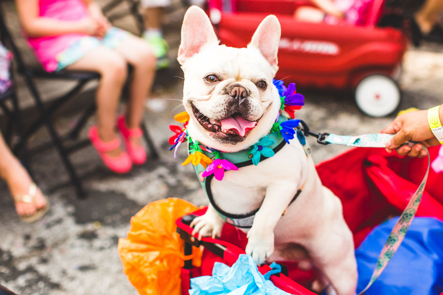 Fiesta San Antonio Will Bring Out Hundreds of Dogs in Colorful Costumes —Here's How to Join Them
