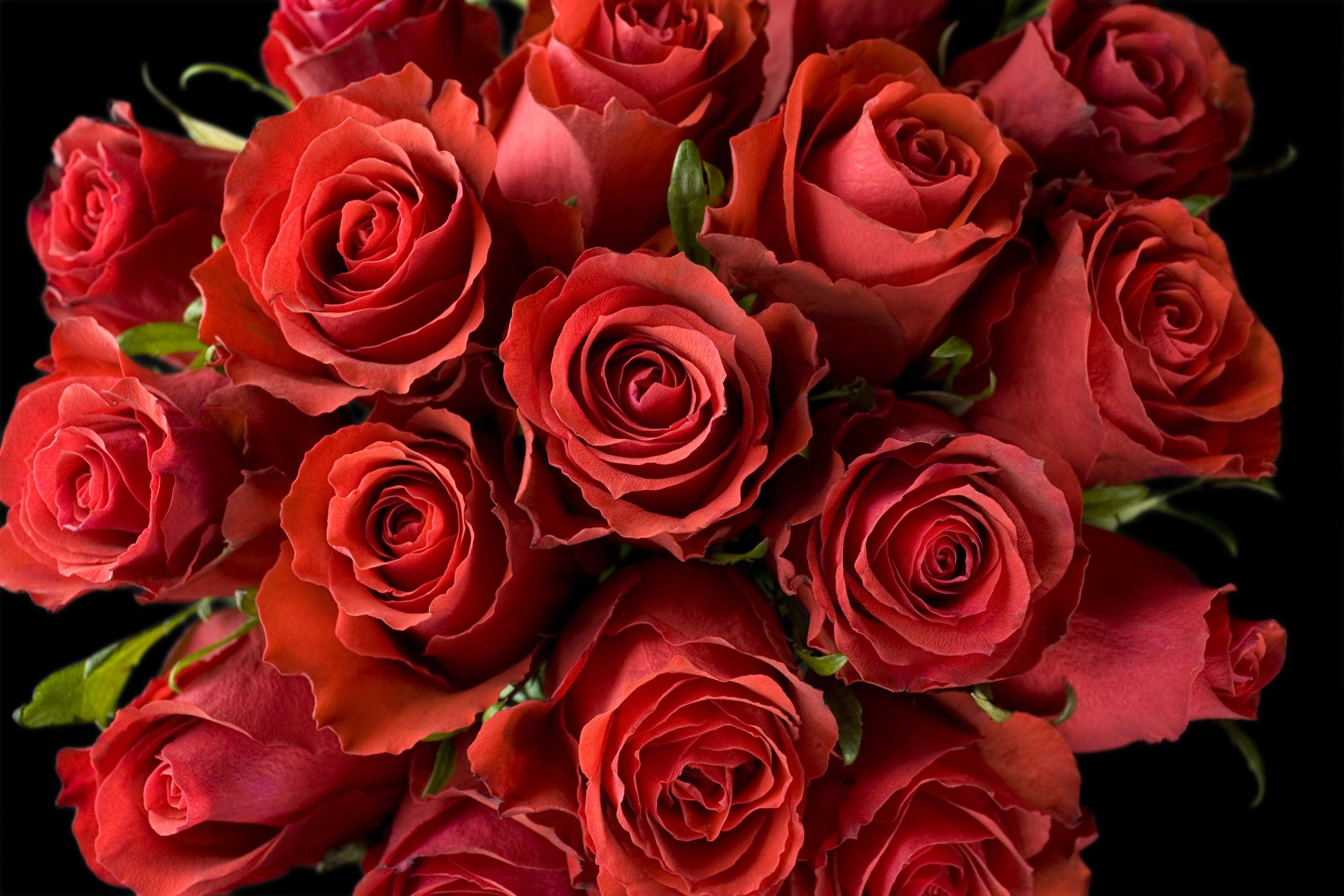 You Can Get Two Dozen Roses for Less Than $20 Thanks to Whole Foods and Amazon
