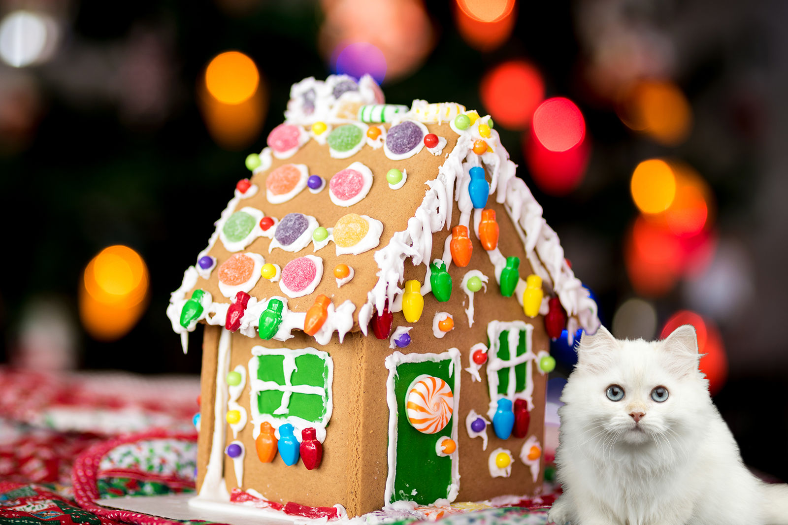 A Gingerbread House for Cats Is the Holiday DIY Project That'll Make Your Dog Jealous