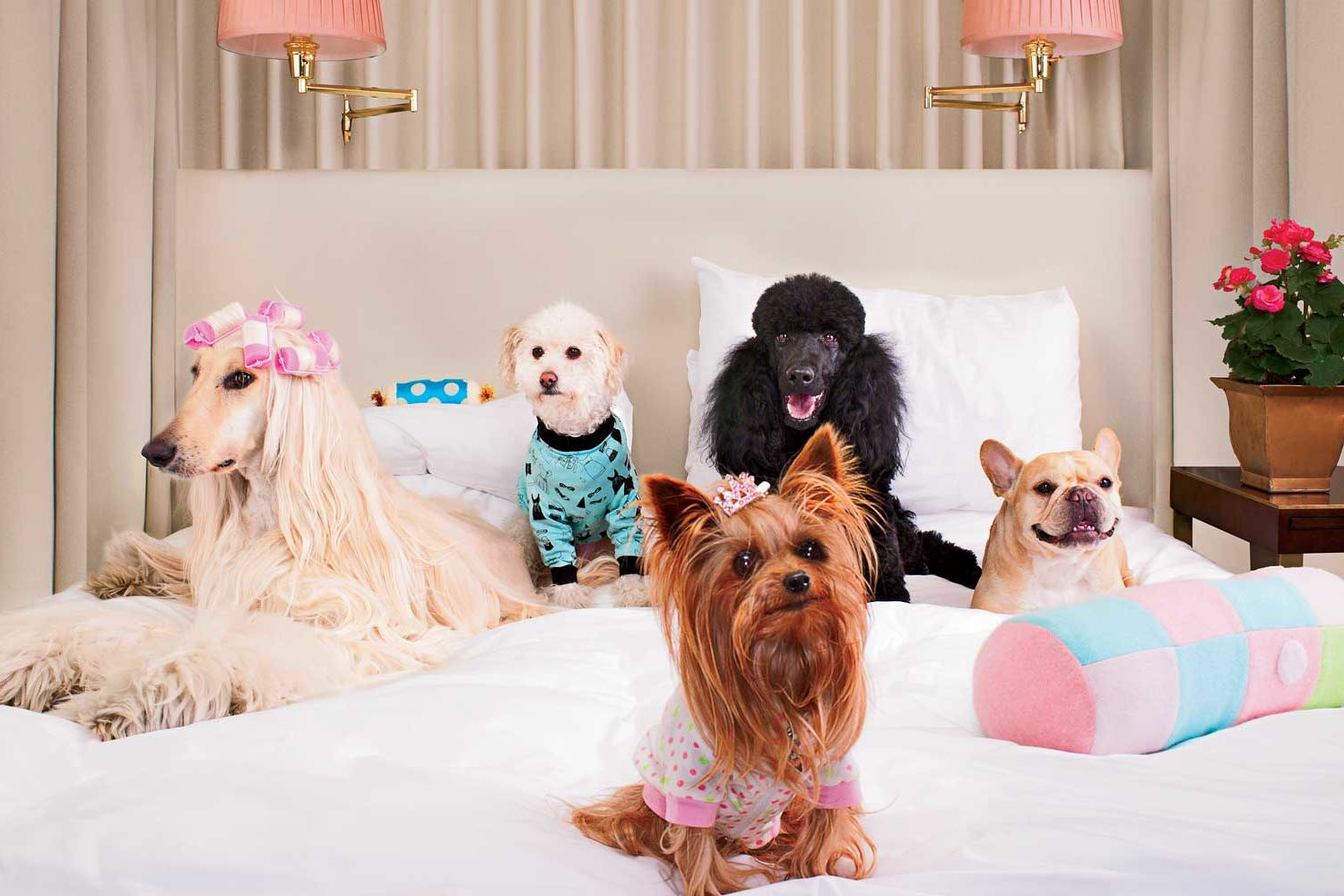 Canopy by Hilton's Dog Policy Will Pamper Your Pet As Much As You