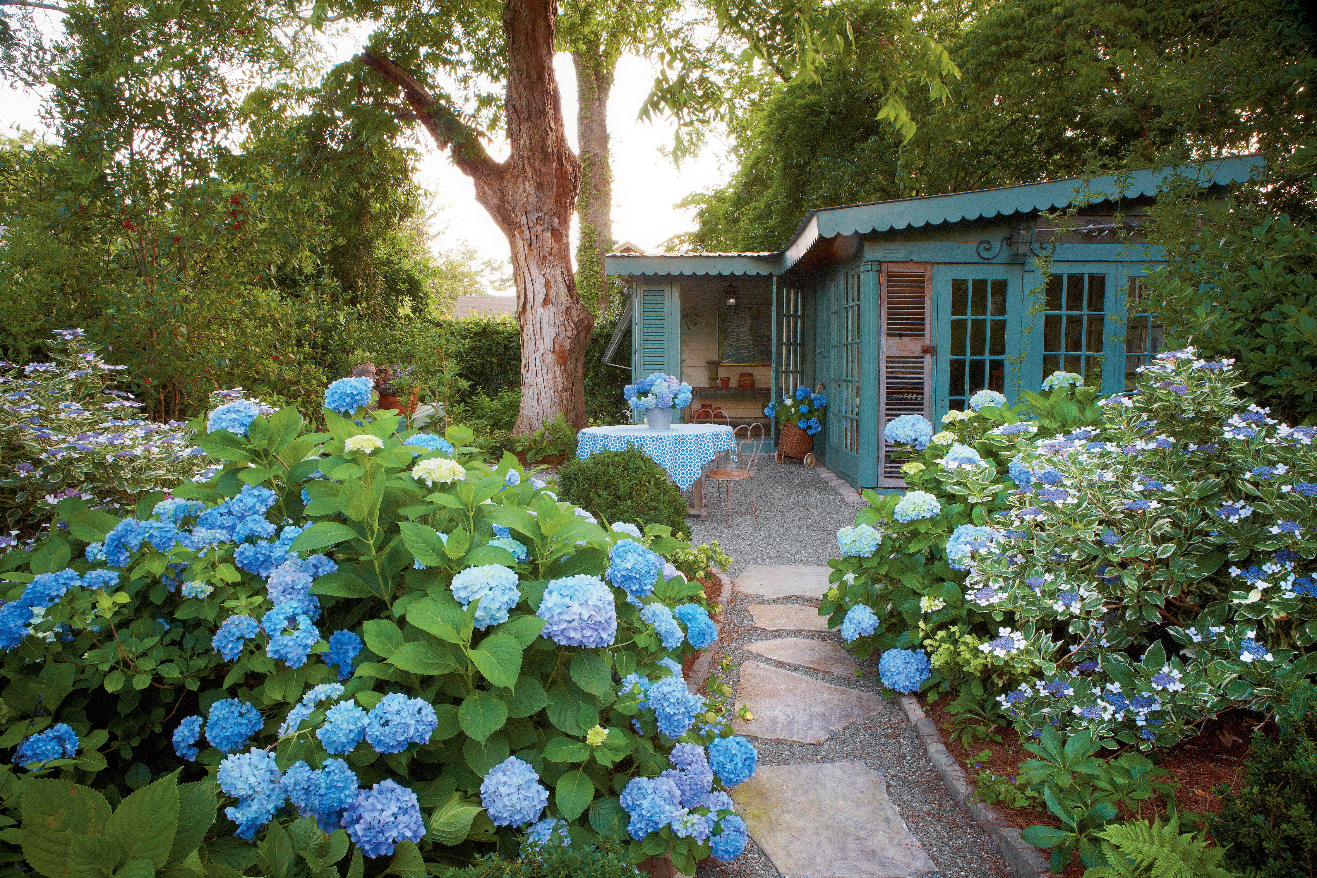 The Complete Guide to French Hydrangeas