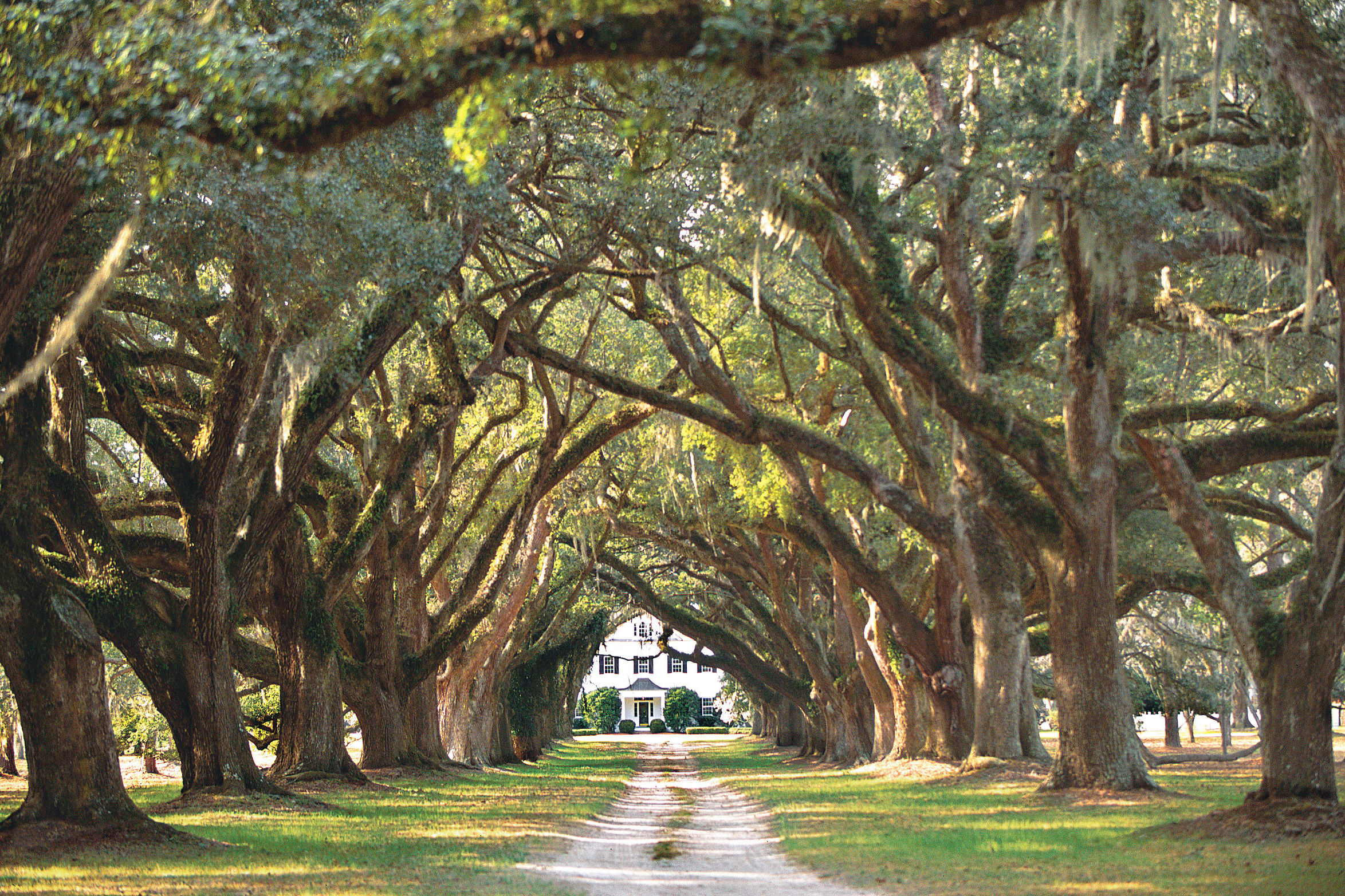 Backroads Guide to Carolina Lowcountry