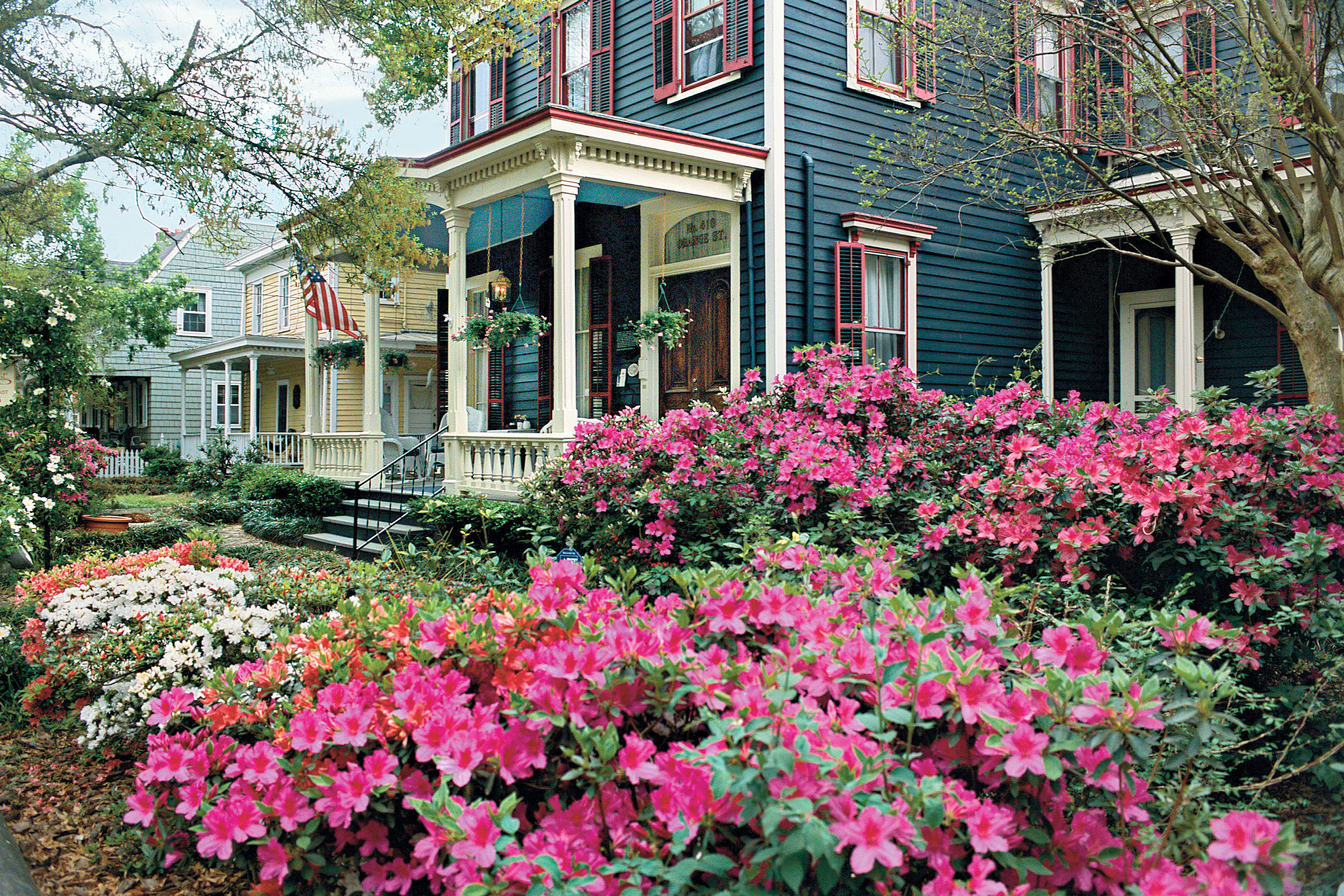 Bloom Town: Wilmington, North Carolina