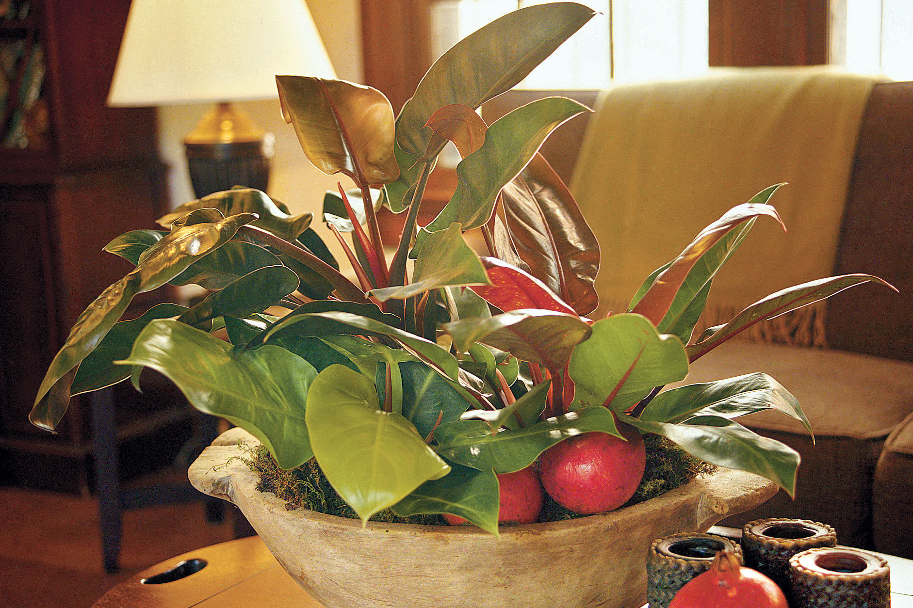 Display Houseplants With Autumn-Toned Foliage