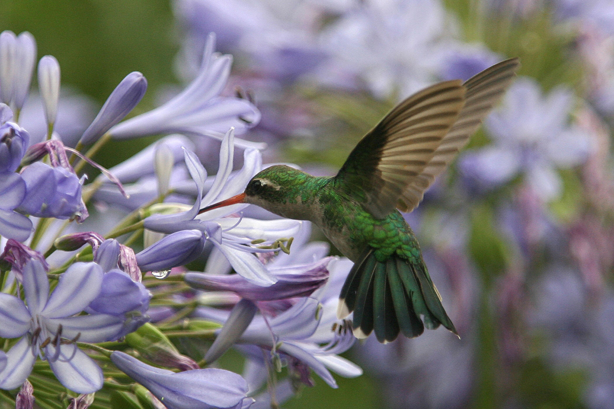 The Best Flowers To Attract Butterflies, Bees, and Hummingbirds
