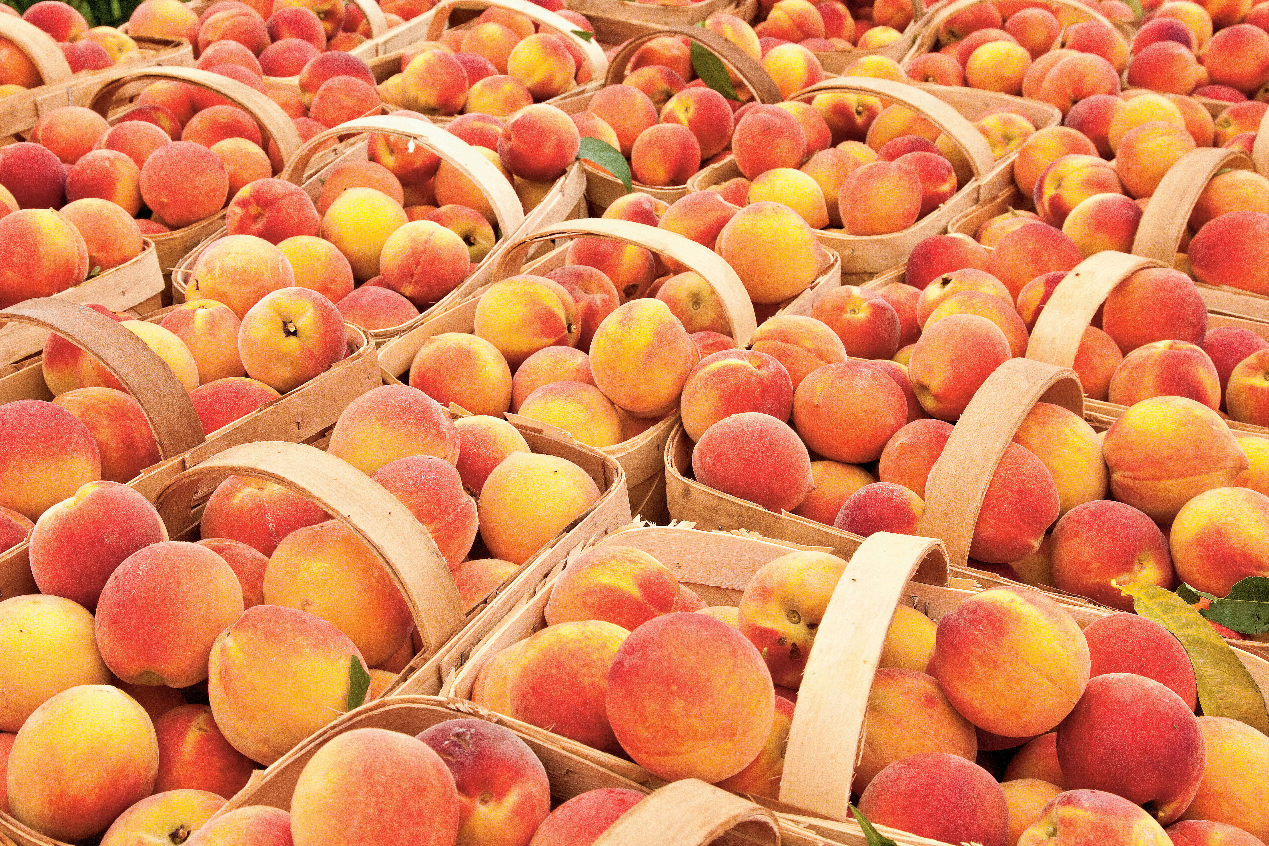 When is Peach Season in the South?