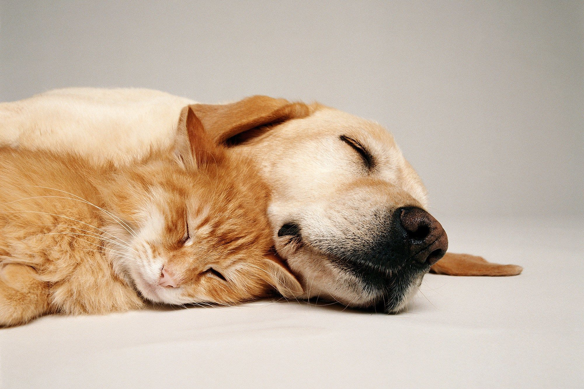What Is Your Cat or Dog Dreaming About? A Harvard Expert Has Some Answers