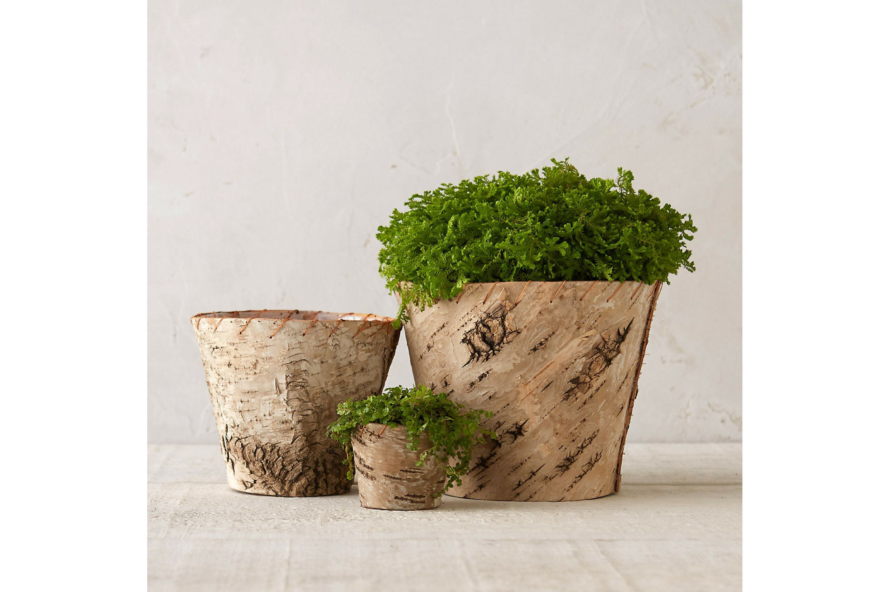 16 Perfect Pots for Indoor Plants Under $50 - Southern Living on what are these plants, what are foliage plants, what are desert plants, what are succulent plants, what are industrial plants, what are flowering plants, what are elephant ear plants, what are bog plants, taking care of house plants, what are perennial plants, what are native plants, what are host plants, what are snake plants, what are geranium plants, what are seed plants, what are water plants, what are terrarium plants, what are hosta plants, what are exotic plants, what are medicinal plants,