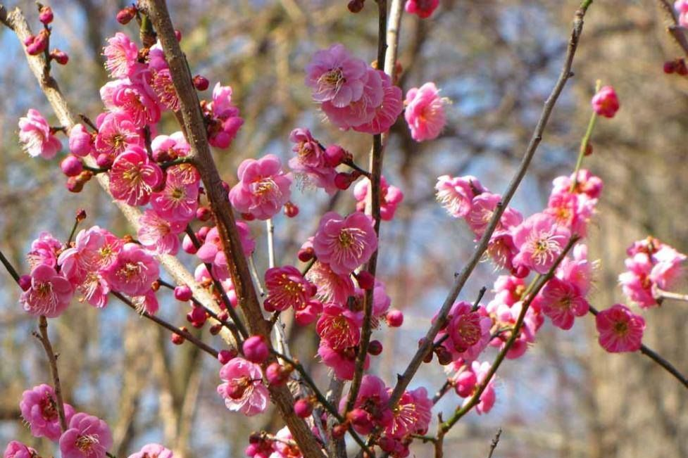 The Most Beautiful Blooms of Winter