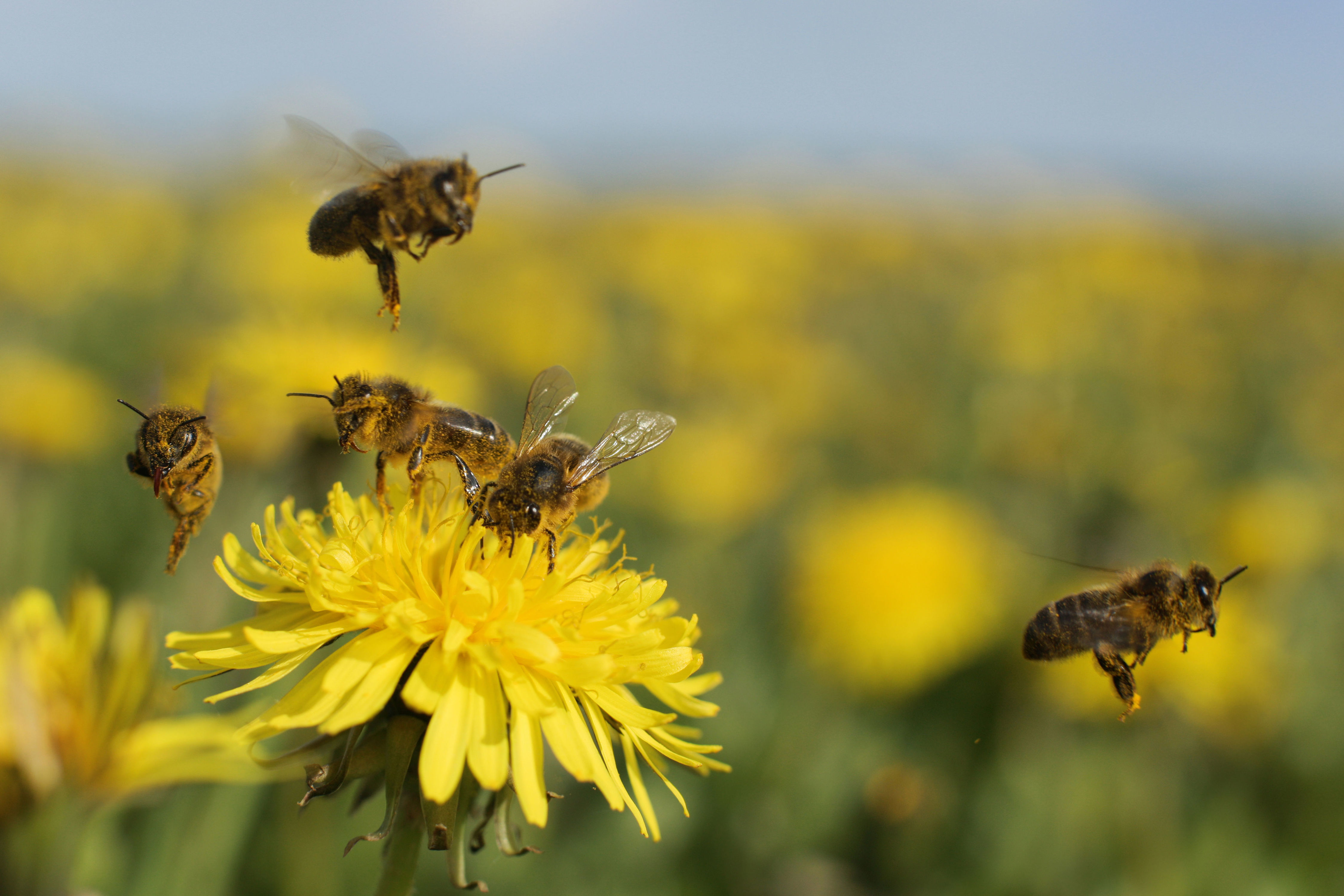 Tips on Planting a Bee-Friendly Garden