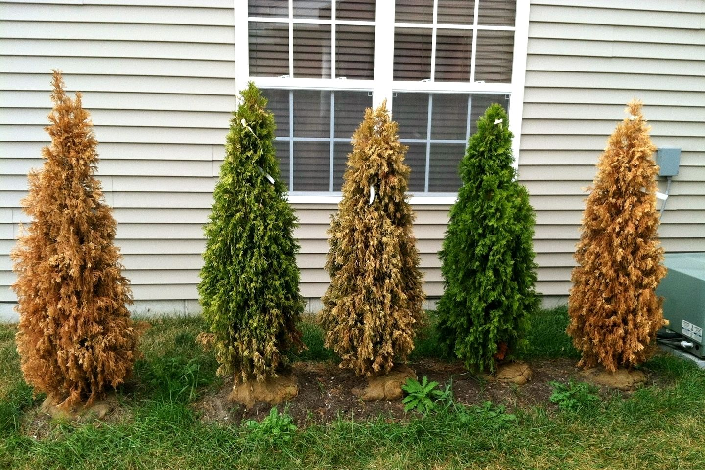 How Many Gardening Mistakes Can One Guy Make?