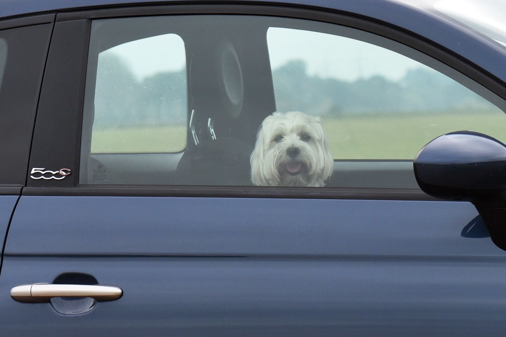 Watch And See Just How Dangerous Your Hot Car Can Be For Your Dog