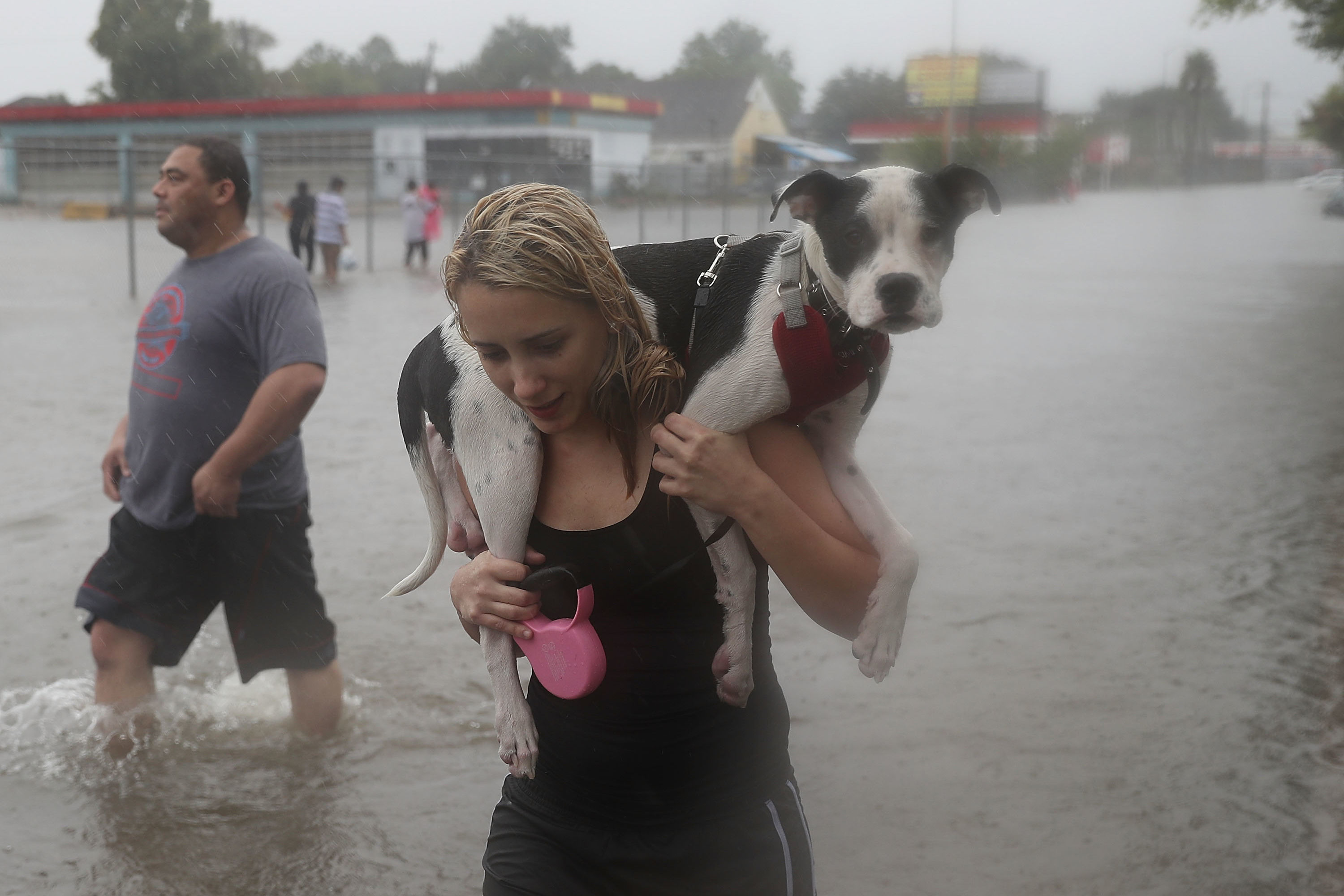 Animal Rescue Groups in Texas Need Your Help—Here's What You Can Do