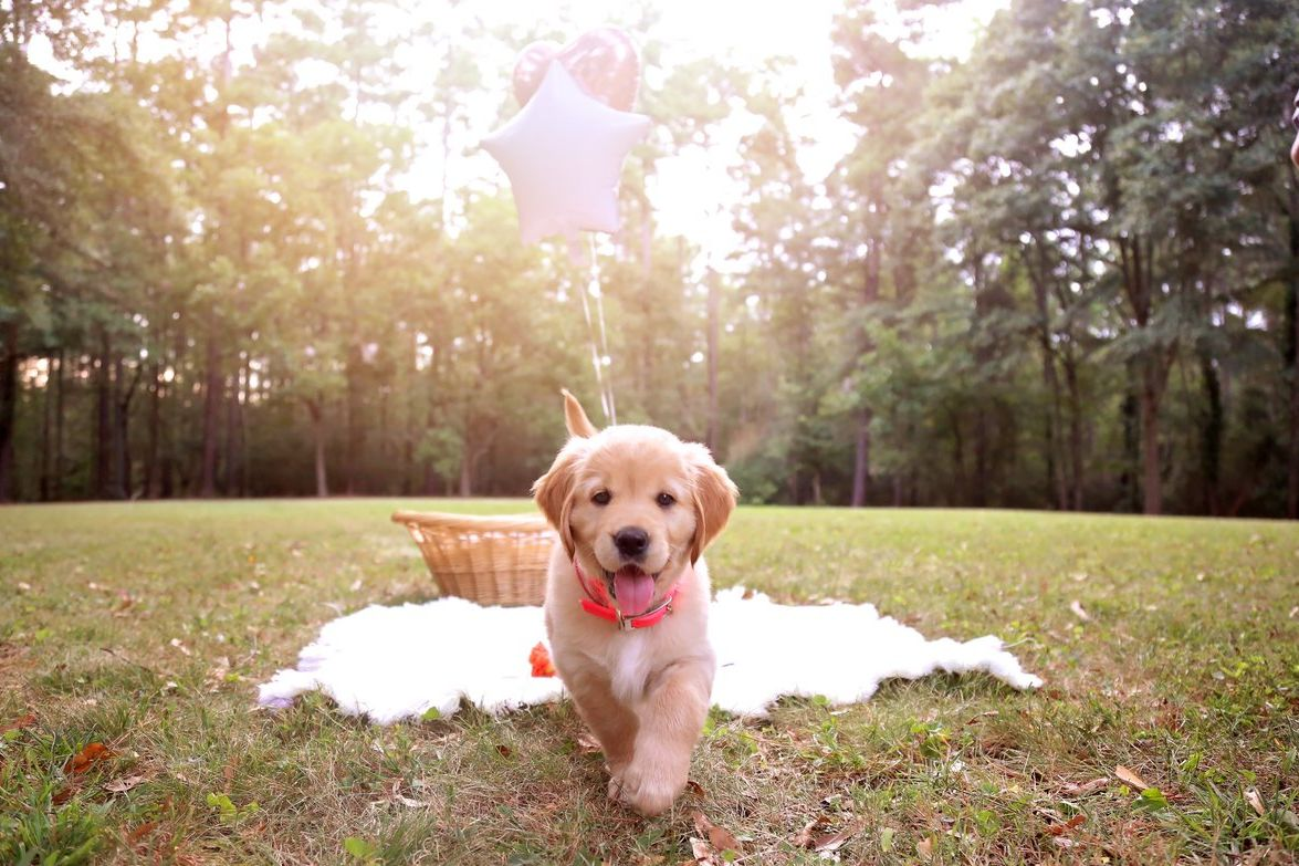 South Carolina Puppy Dad Hires Photographer For Professional Photo Shoot