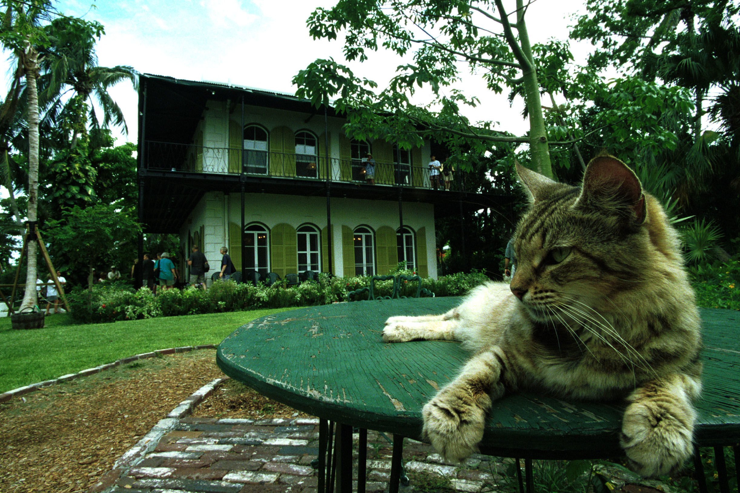 Ernest Hemingway's Famous Six-Toed Cats Come Out of Hurricane Irma Without a Scratch