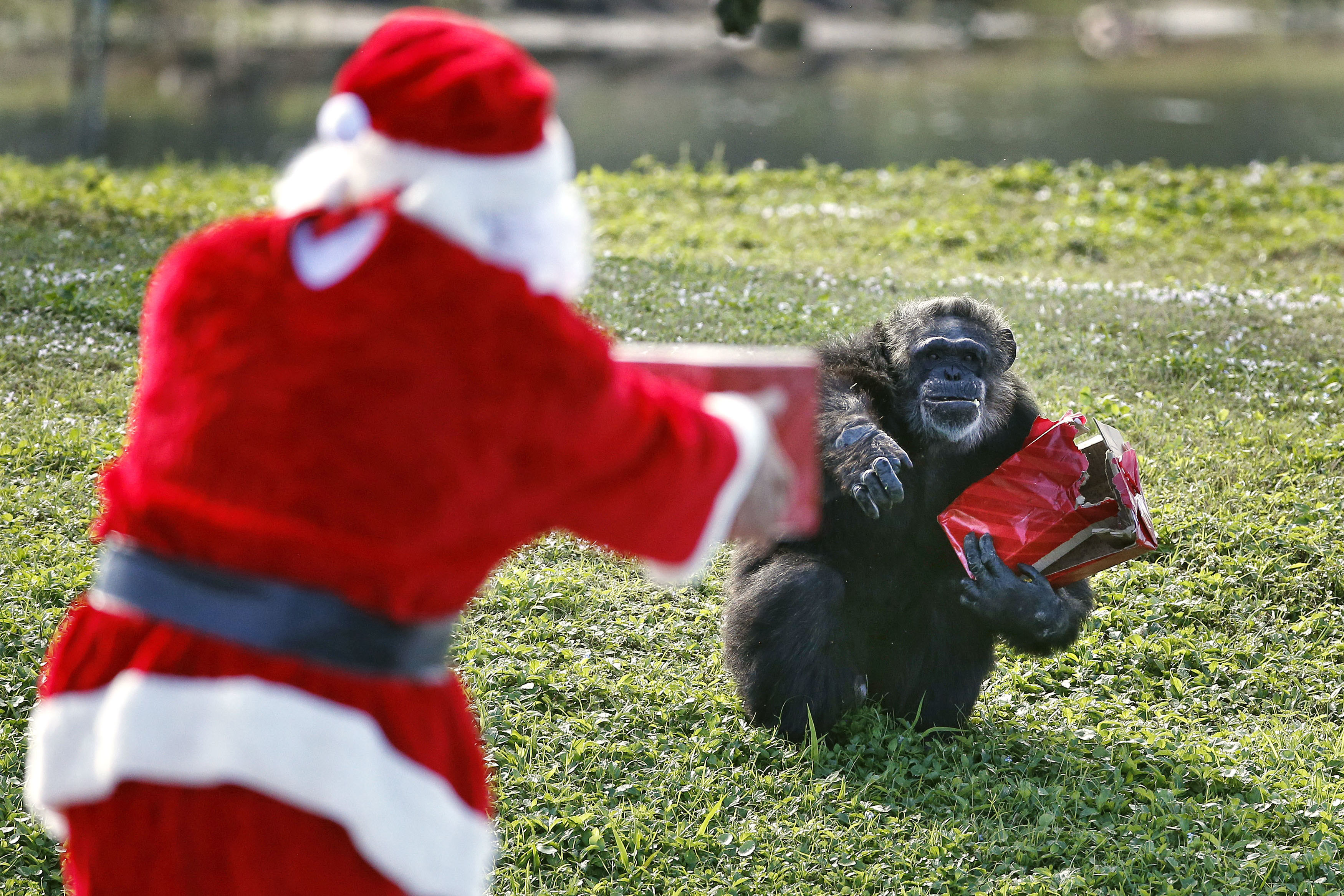 BREC's Baton Rouge Zoo Shares Christmas List for Animal Gifts